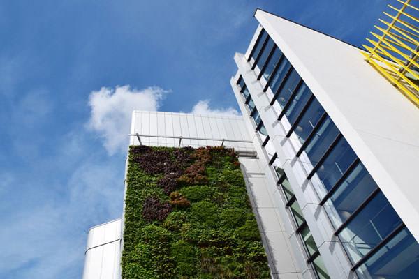 Университет Бристоля «озеленили»