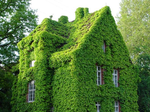 Озеленение крыши дома: 4 главных аргумента «за»