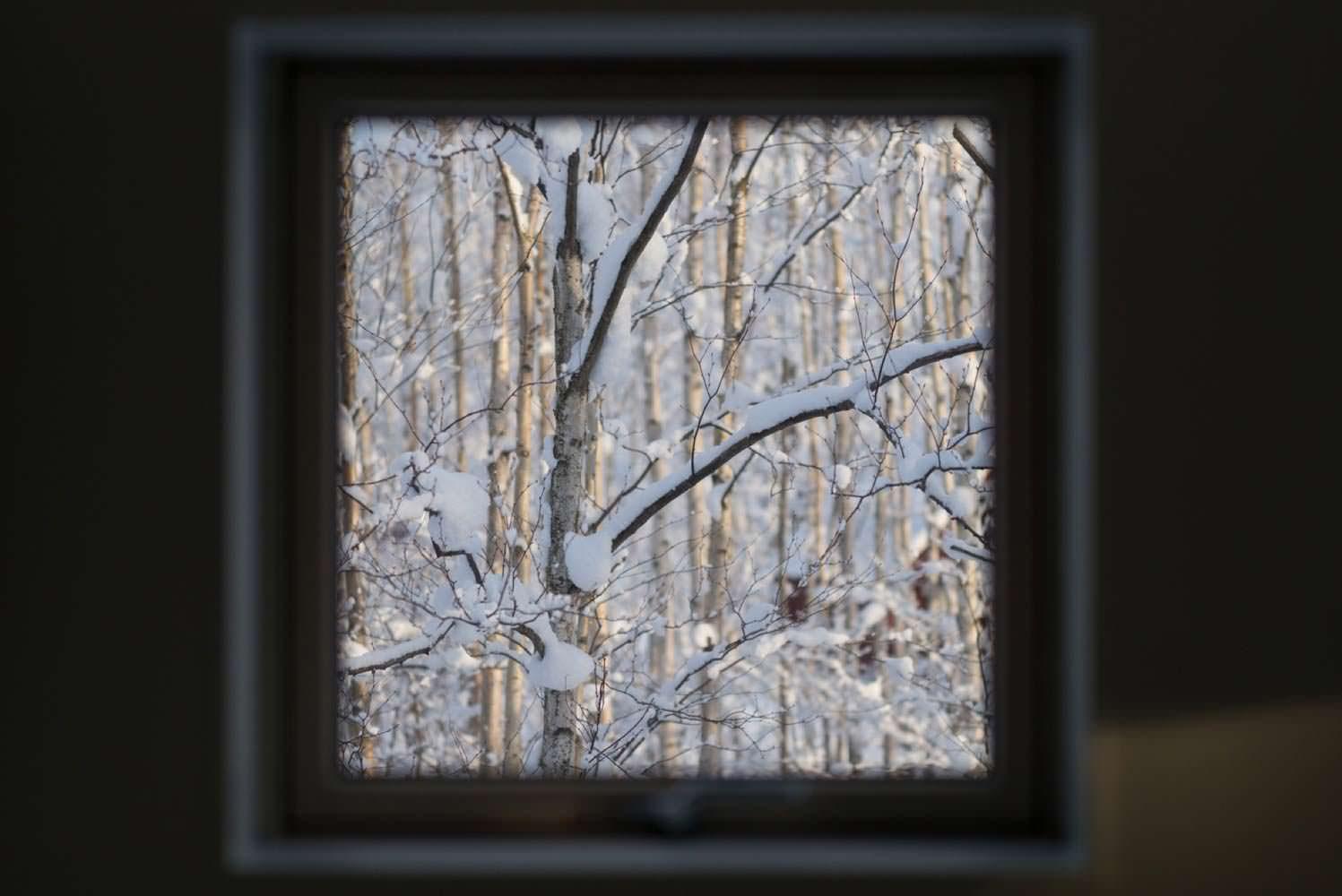 Вид из окна на деревья