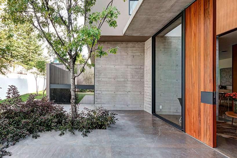 Фото | Дерево перед входом в дом