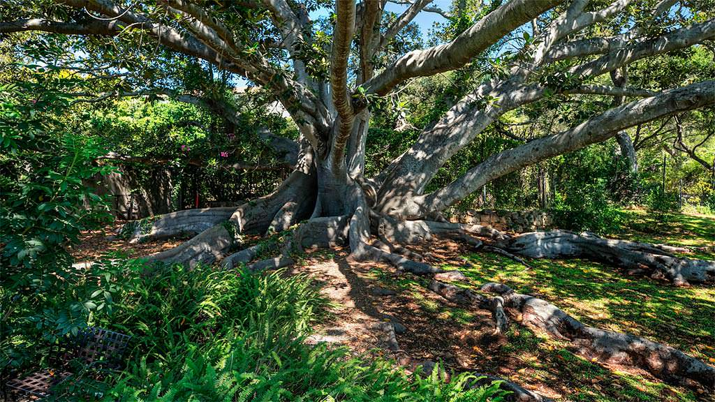 Зрелые деревья на участке