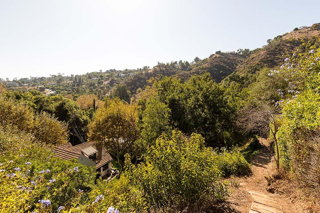 Вид на деревья с участка дома Бека Хэнсена