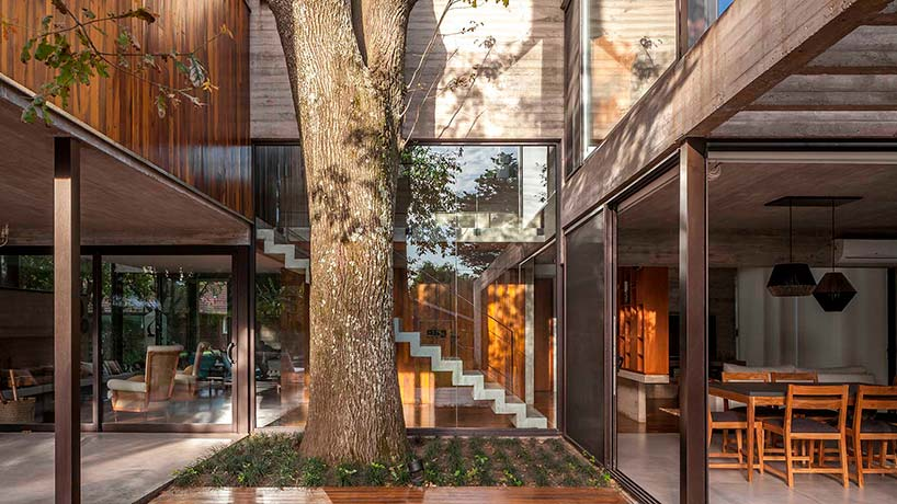 Дерево посреди дома