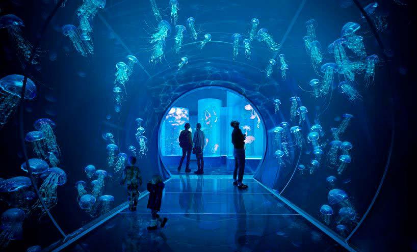 Стеклянный туннель внутри аквариума с медузами