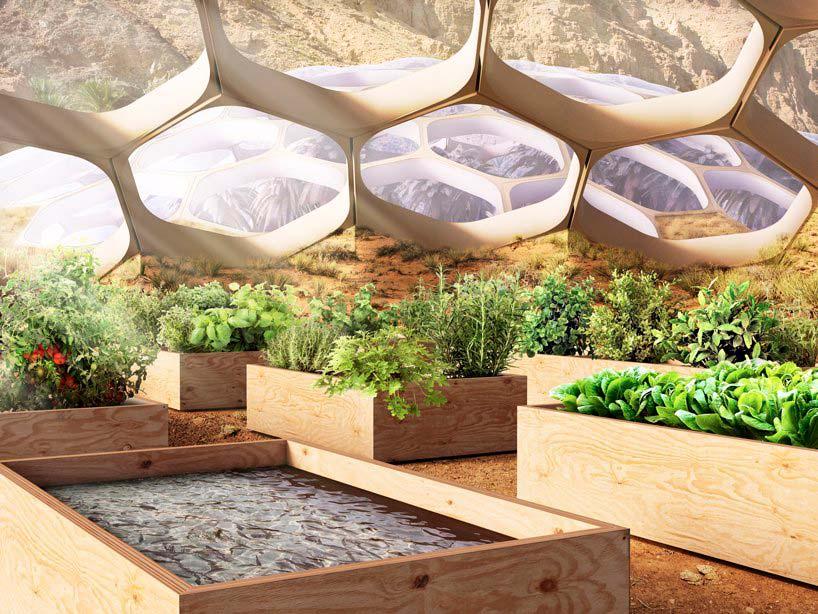 Сотовый купол Центра охраны дикой природы Biodomes