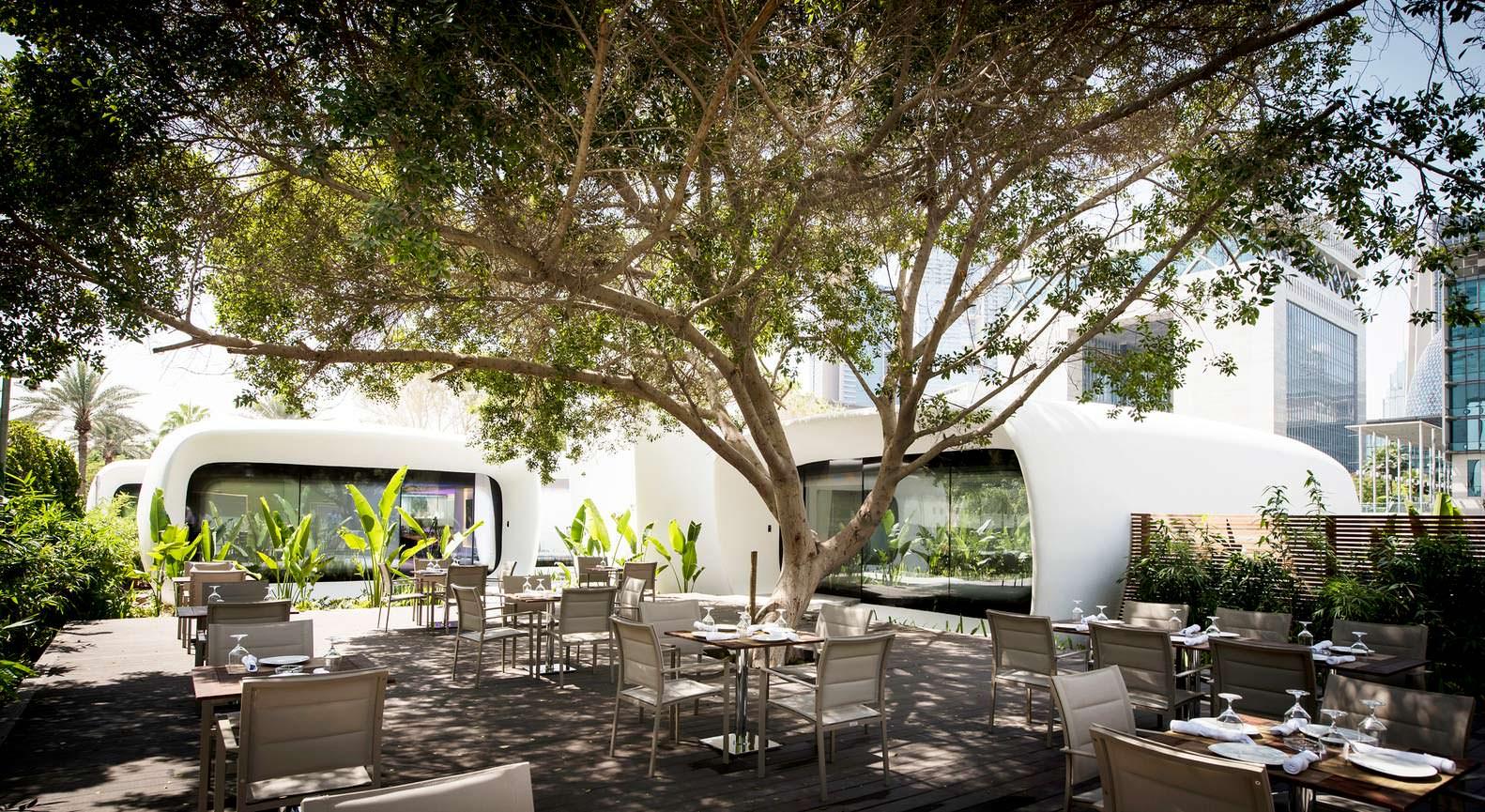 Кафе в тени дерева на территории Dubai Future Foundation