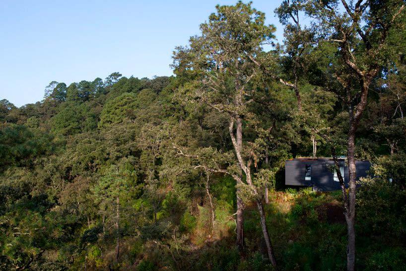 Дом в лесу. Проект Cadaval & Solà-Morales